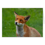 Fox rojo tarjeton