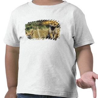Fox rojo, vulpes del Vulpes, joven en la guarida, Camisetas