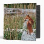 "Fox rojo, vulpes del Vulpes, península de Alaska,  Carpeta 1 1/2"""