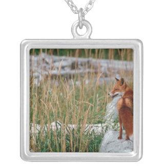 Fox rojo, vulpes del Vulpes, península de Alaska,  Colgantes