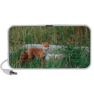 Fox rojo, vulpes del Vulpes, península de Alaska, Mini Altavoces