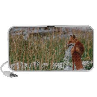 Fox rojo, vulpes del Vulpes, península de Alaska,  Portátil Altavoz