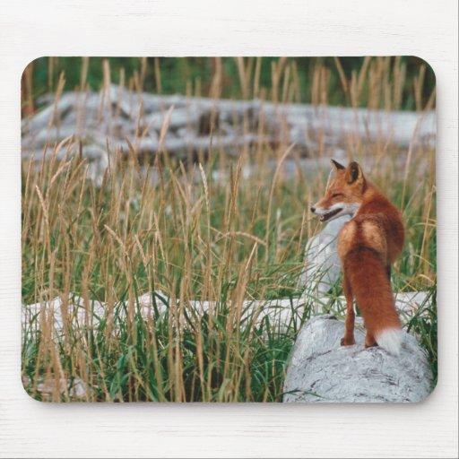 Fox rojo, vulpes del Vulpes, península de Alaska,  Alfombrillas De Raton