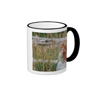 Fox rojo, vulpes del Vulpes, península de Alaska,  Taza