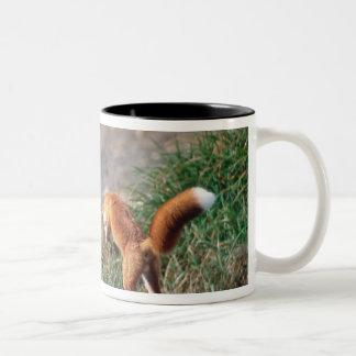 Fox rojo, vulpes del Vulpes, península de Alaska,  Taza De Café