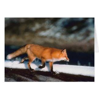 Fox Runs In Snow Card