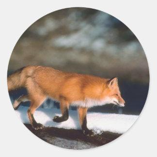 Fox Runs In Snow Classic Round Sticker