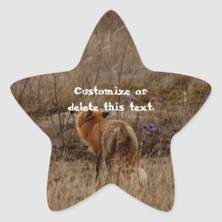 Fox Sniffing the Crocuses; Customizable Star Sticker