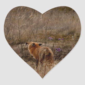 Fox Sniffing the Crocuses Heart Sticker