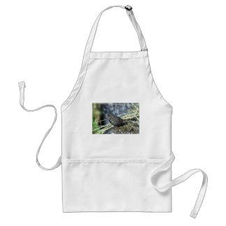 Fox sparrow apron