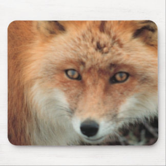Fox Species Mouse Pad