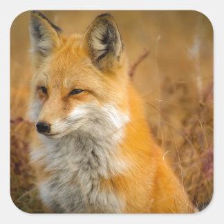 fox square sticker