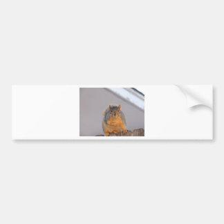 Fox Squirrel Bumper Stickers