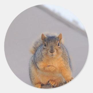 Fox Squirrel Classic Round Sticker