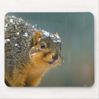 Fox Squirrel in Snow Mouse Pad