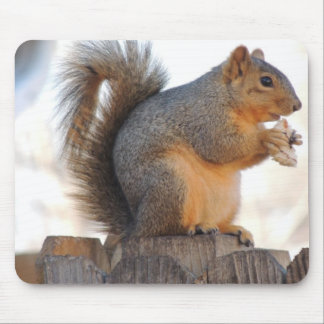 Fox Squirrel Mouse Pad