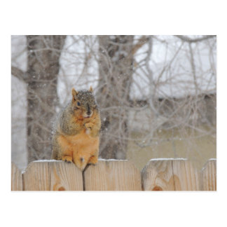 Fox Squirrel Postcard