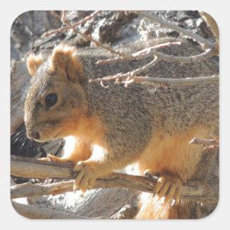 Fox Squirrel Square Sticker