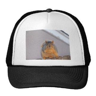 Fox Squirrel Trucker Hat