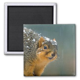 Fox Squirrel Winter 2 Inch Square Magnet