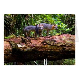 FOX TAIL BRUNCH) CARD