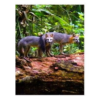 FOX TAIL BRUNCH) POST CARD