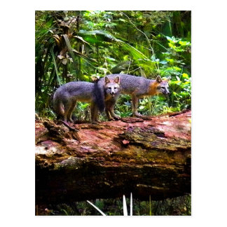 FOX TAIL BRUNCH) POSTCARD