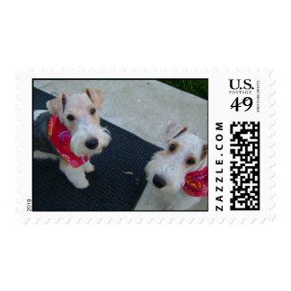 Fox terrier cabelludos del alambre sello postal