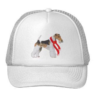 Fox terrier del alambre en una bufanda gorras