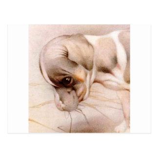 ¡Fox terrier del bebé - LINDO ESTUPENDO! Tarjeta Postal