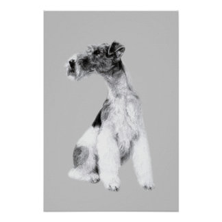 Fox Terrier Drawing Poster