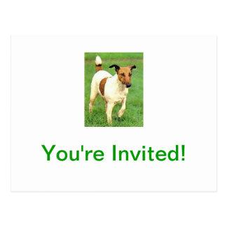 Fox terrier liso postal