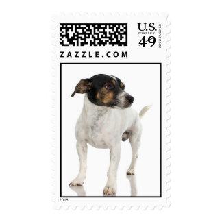 Fox terrier liso sellos