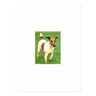 Fox terrier liso tarjetas postales
