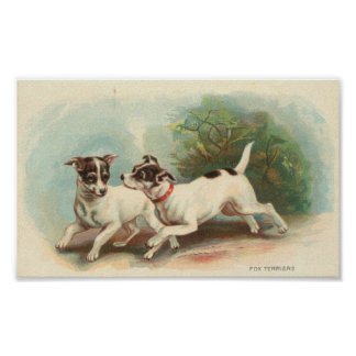 Fox terrier posters