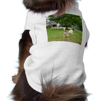 Fox_Terrier,_Playtime_White_Ribbed_Pet_Coat Shirt