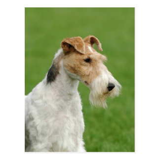 Fox terrier postal