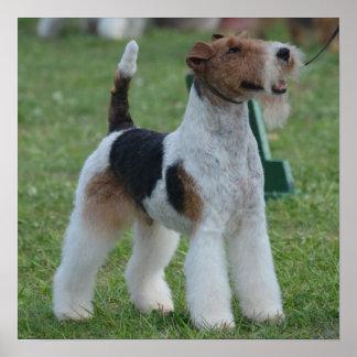 Fox Terrier Poster