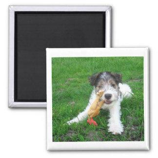 fox terrier pup.png del alambre imán cuadrado