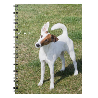 Fox Terrier Smooth dog beautiful photo notebook