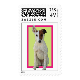 Fox Terrier Smooth dog beautiful postage stamp