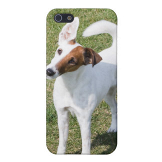 Fox Terrier Smooth dog cute photo iphone 4 case