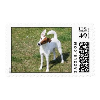 Fox Terrier Smooth dog photo postage stamp