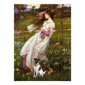 Fox Terrier Smooth -   Windflowers Poster