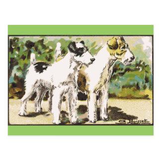Fox terrier tarjeta postal