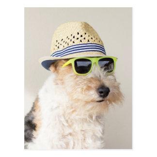 Fox terrier tarjetas postales