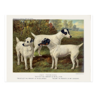Fox Terriers from Cassell's Book of the Dog- Postcard
