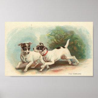 Fox Terriers Poster