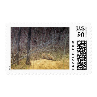 Fox Times Two Postage