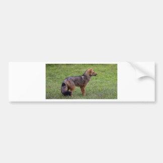 Fox - Torres del Paine Bumper Sticker